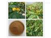 wtls076木豆叶提取物木豆叶黄酮  现货包邮品质保证